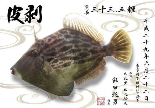 皮剥デジタル魚拓
